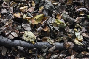 green waste disposal in perth